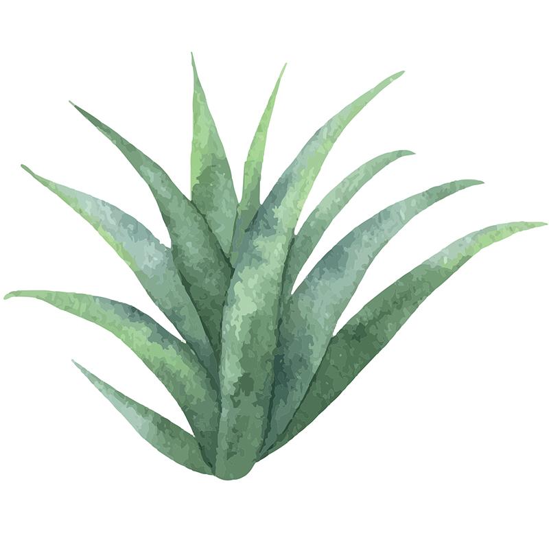 Naklejka Aloesowe ukojenie